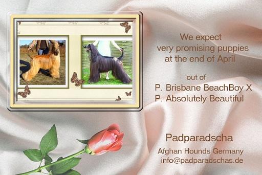 Padparadschas   Blockshütte » Blog Archive » Wir erwarten Nachwuchs !!! 6cfbfcc92